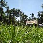 Jiwa Damai Bali Organic Garden
