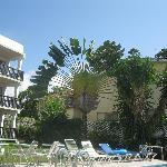Fan Palm Tree on the Magic Isle Property