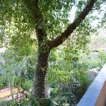Jardin tropical - arbre extraordinaire