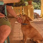 Toupinou...The owner's dog kept us company during dinner and breakfast but was very calm, and ni