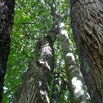 Walk the many trails on 33 acres on the premises, enjoy Nature.