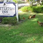 Littleton Inn sign & Mary's chickens
