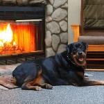 My Rottie in front of the fireplace