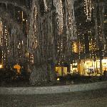 """Gus"" the Banyan Tree Dressed with Lights"