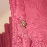 These bugs were all over our room.