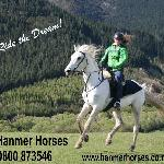Quality horses & rides
