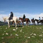 Hanmer Horses