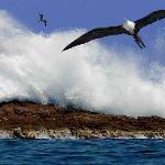 Frigate bird out on the Islas Marietas