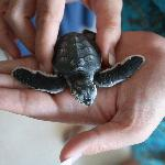 one of the baby turtles