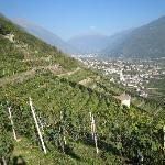 Foto di B&B Il Grappolo Valtellina