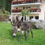 Unser jüngster Streichelzoo-Neuzugang: Baby-Esel Paulchen