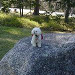 Pets friendly lodging Bartlett Inn NH