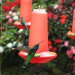Hummingbird Exhibit