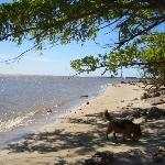playa arenisca