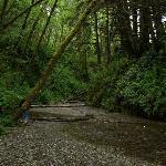 Entering Fern Canyon