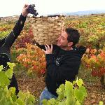 Vendimia Rioja 2010