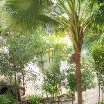 trees around the swimming pool