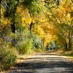 Fall colors by the river -  from the Billings Convention & Visitors Bureau