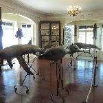 Museum mit ausgestoften Fischen