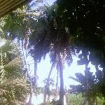 les tropiques non?