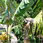 Les lemuriens du parc national