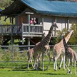 Sonoma Serengeti