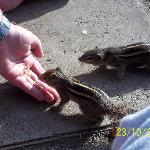 the friendly chipmunks around the pool area.