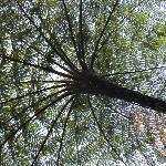 super arbres