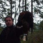 during hawk walk