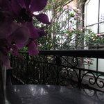 Photo of Casa Luna Restaurant