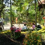 Betel Garden homestay