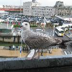 Sea Gull from the window
