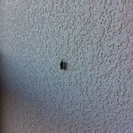 Bug on the wall . . .