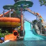 Waterbom Park   Wild!!!