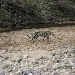 Leopard im Park