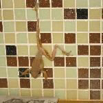 Our tree frog bath companion