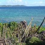An iguane enjoys the view