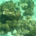 Reef in Tobago Cays