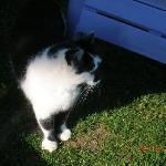 Josephine the Cat