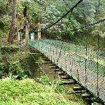 Path in Alishan Country Park