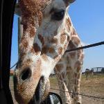African Safari Wildlife Park Foto