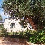 un bugalons au milieu des oliviers,,beufff