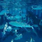 Sharks & Bonefish