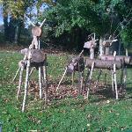 Deer in Lough Key
