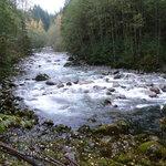 Lynn Creek