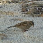 petit oiseau sur la plage