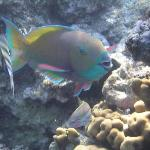 Fishes on the house reef