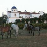 young horses at the guadalupe adobe