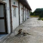 Foto de Villa dell'Imperatore