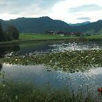 lake in the pasture, Demelhof